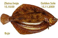 2nd Zlatna švoja - 2nd Golden Sole