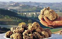 Truffle days in Istria