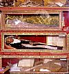 The Most Mystical mummies of Europe - Vodnjan's Corpi Santi